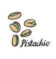 drawing pistachio vector image