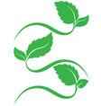 leaves logo vector image
