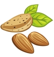 Composition of three delicious almond nuts vector image