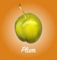 fresh realistic plum vector image