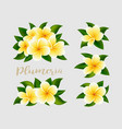 realistic white yellow plumeria frangipani flowers vector image vector image