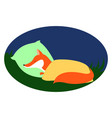 red fox sleeping on white background vector image vector image