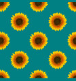sunflower seamless on green teal background vector image vector image