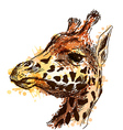 Colored hand sketch head giraffe vector image vector image