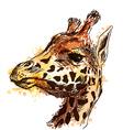 Colored hand sketch head giraffe vector image