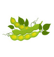 natural organic soybeans made in flat style vector image vector image