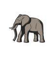 elephant african safari hunt and wild zoo animal vector image vector image