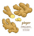 ginger roots set vector image vector image