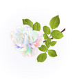 rose multicolor twig with leaves vector image vector image