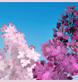 sweet lilac on the blue-sky background two vector image