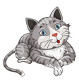 Gray cat on white background vector image vector image