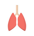 pulmonary system human lungs vector image
