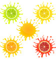 Citrus Fruit in Splashes of Juice vector image vector image