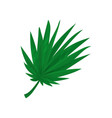 green fan palm leaf vector image vector image