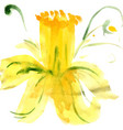 stylized flower narcissus vector image