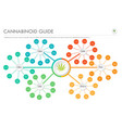 cannabinoid guide horizontal business infographic vector image vector image
