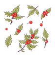 holly berry icon christmas symbol vector image vector image
