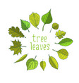 tree leaves colorful vector image