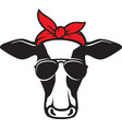 cow head with aviator sunglasses color vector image vector image