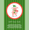 piglet symbol of new year with gift box isolated vector image vector image