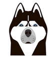 portrait of a husky in a minimalist style vector image
