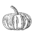 Pumpkin vintage engraving vector image