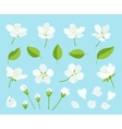 set beautiful cherry tree flowers isolated on vector image vector image