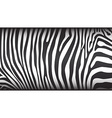 Zebra pattern vector image vector image