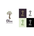 elegant olive tree isolated icon tree logo vector image vector image