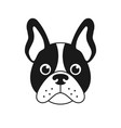 french bulldog face isolated on white background vector image