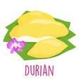 durian thai popular fruit white background vector image vector image