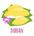 Durian thai popular fruit white background