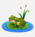 green frog sits on a leaf in the pond vector image