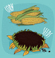 set of isolated corn ears and sunflower vector image