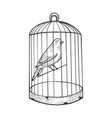 canary bird in cage engraving vector image