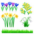 detailed spring flowers and vector image vector image