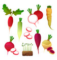 set food from radish vegetable products vector image