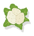 vegetable cauliflower cabbage vector image