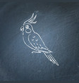 corella parrot icon sketch on chalkboard vector image