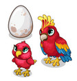 family of parrots parent baby and egg vector image vector image