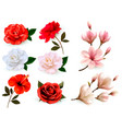 set of a beautiful flowers isolated on a white vector image