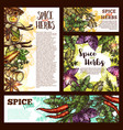 spice herb and aromatic vegetable sketch banner vector image vector image