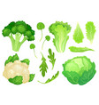 cartoon cabbages fresh lettuce leaves vegetarian vector image vector image