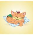 cat5 vector image vector image