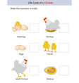 chicken workbook vector image vector image