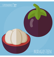Flat design mangosteen icon vector image vector image
