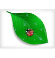 Green leaf and ladybird vector image vector image