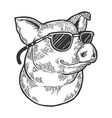 pig animal in sunglasses sketch engraving vector image vector image
