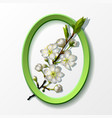 branch of white cherry flowers in green frame vector image vector image