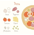 Regular pizza ingredients vector image vector image